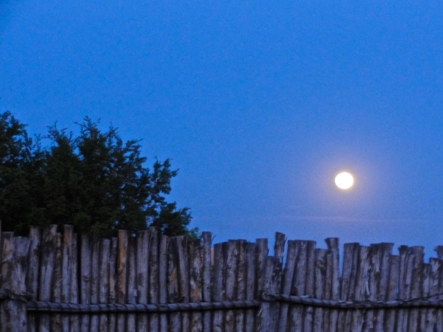 full moon over the coyote fence