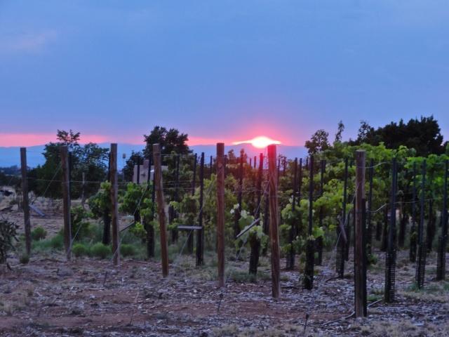 our neighbor's vineyard