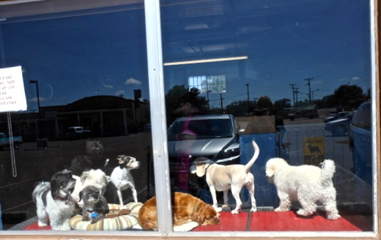 How much is that doggie in the window . . . ?