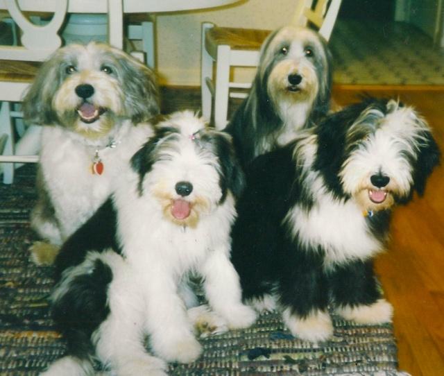 Murphy, Ruffa, Bella & Rugby - the Beardie family