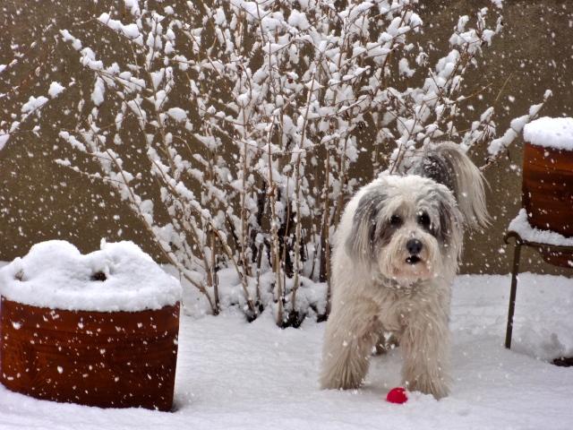 Bella's always ready to play ball, snow, rain or shine