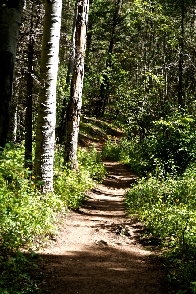 Santa Fe National Forest hiking trail